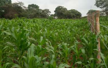 Land for sale in Gatanga