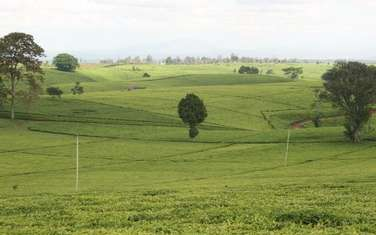 40470 m² land for sale in Cianda