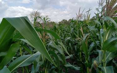 4047 m² commercial land for sale in Malindi Town