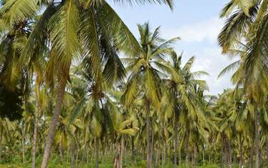 500 m² land for sale in Malindi Town