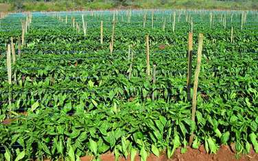 Commercial land for sale in Kajiado Town