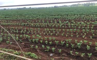 9 ac land for sale in Nanyuki