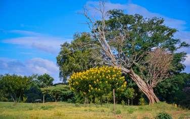 0.125 ac land for sale in Kiambu Road