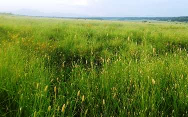 Land for sale in the rest of Kajiado South