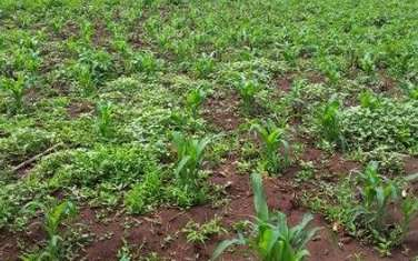 500 m² land for sale in Ngong
