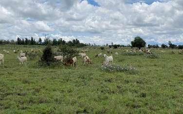 1 ac land for sale in Kitengela