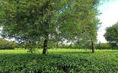 0.5 ac residential land for sale in Limuru Area