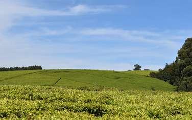 32374.9 m² land for sale in Tigoni