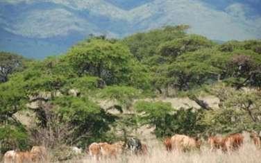 400 m² land for sale in Kiserian