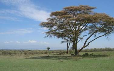 25 m² commercial land for sale in Longonot