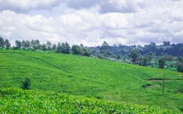10 ac land for sale in Cianda