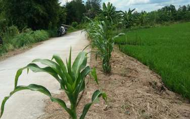 2738 m2 farm land for sale in District O Mon