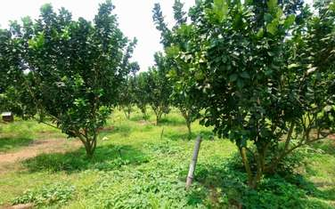 2000 m2 farm land for sale in District Cam My