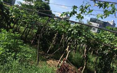 75.5 m2 residential land for sale in Thanh pho Thai Binh