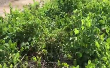 23441 m2 residential land for sale in District Can Gio