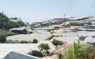 1175 m2 land for sale in Thanh pho Da Lat