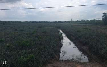 50000 m2 residential land for sale in District Tan Phuoc