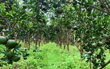 17000 m2 farm land for sale in District Phung Hiep